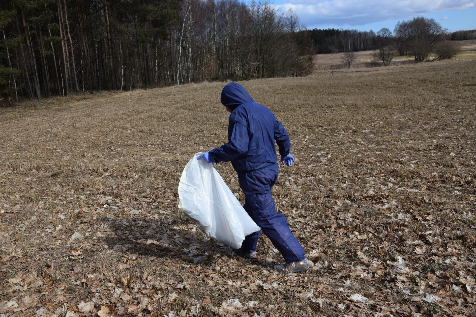 Szczątki dzików rozrzucone na polu. Tak wygląda walka z ASF? 4