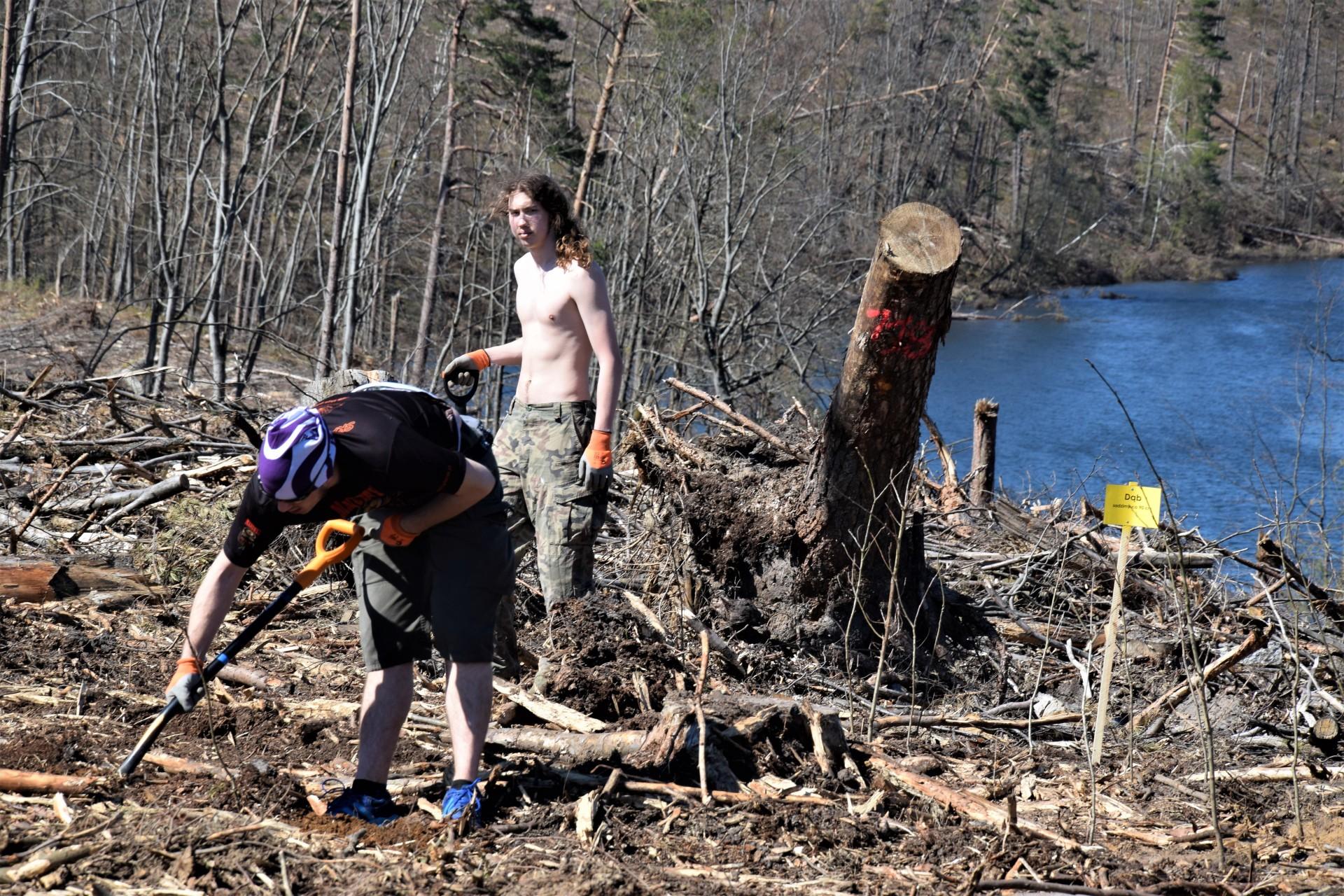 Dziemiany. Wielkie sadzenie drzew po nawałnicy 12