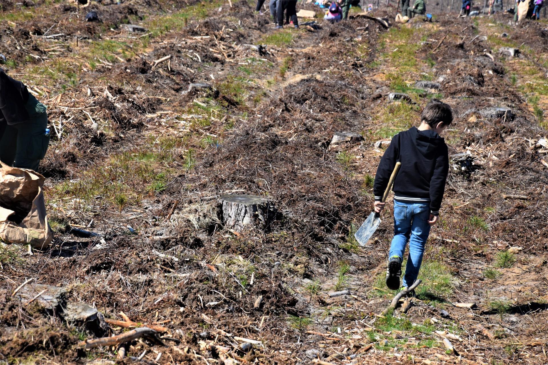 Dziemiany. Wielkie sadzenie drzew po nawałnicy 5