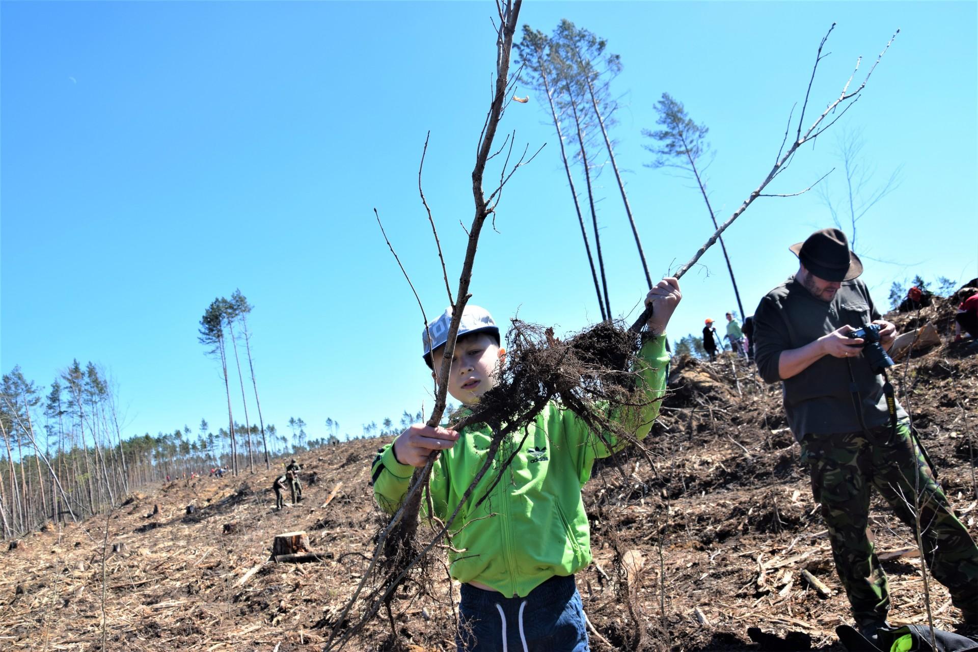Dziemiany. Wielkie sadzenie drzew po nawałnicy 8