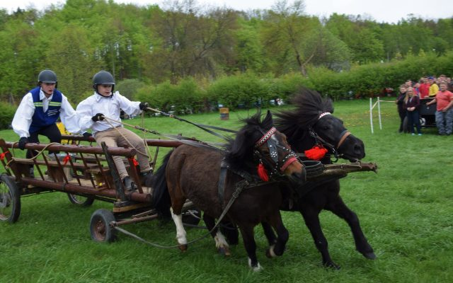 Konie, Kaszuby, Wiśta wio! Zawody w Ostrzycach [FOTOREPORTAŻ] 9