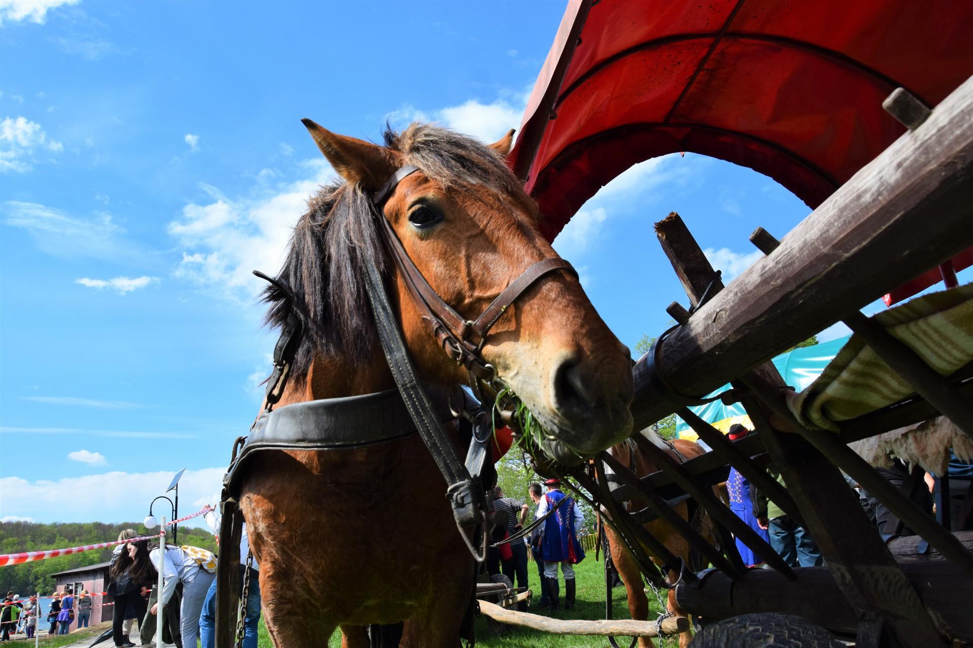 Konie, Kaszuby, Wiśta wio! Zawody w Ostrzycach [FOTOREPORTAŻ] 11