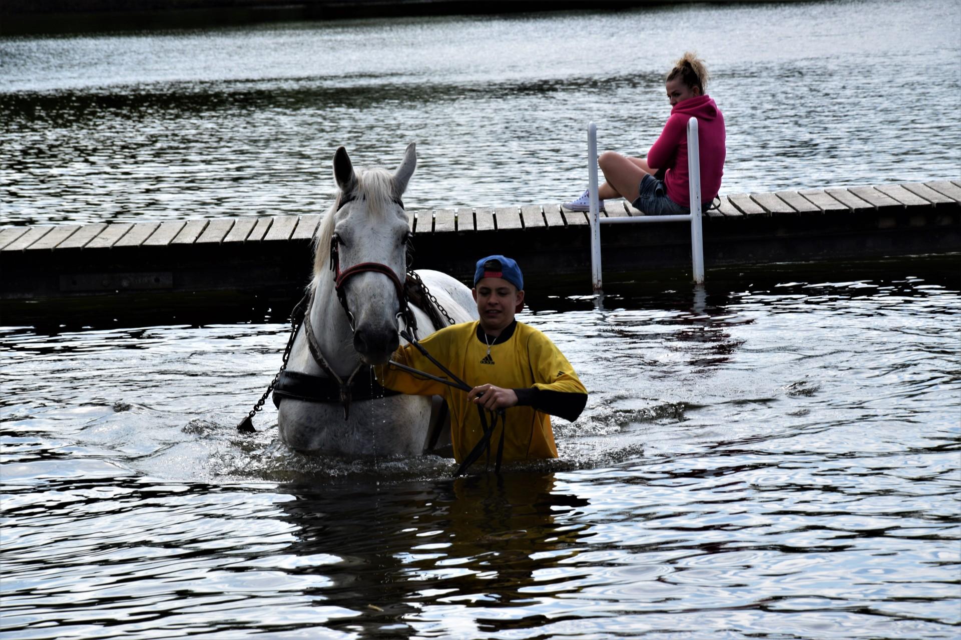 Konie, Kaszuby, Wiśta wio! Zawody w Ostrzycach [FOTOREPORTAŻ] 18