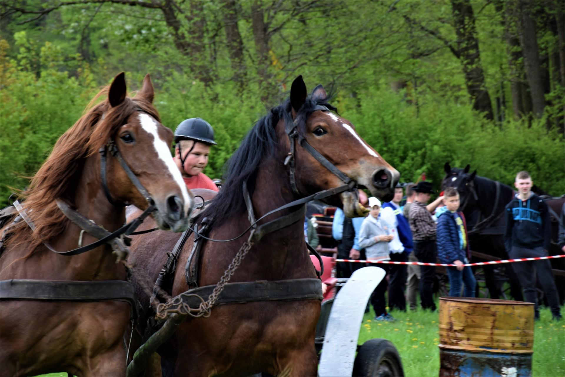 Konie, Kaszuby, Wiśta wio! Zawody w Ostrzycach [FOTOREPORTAŻ] 1