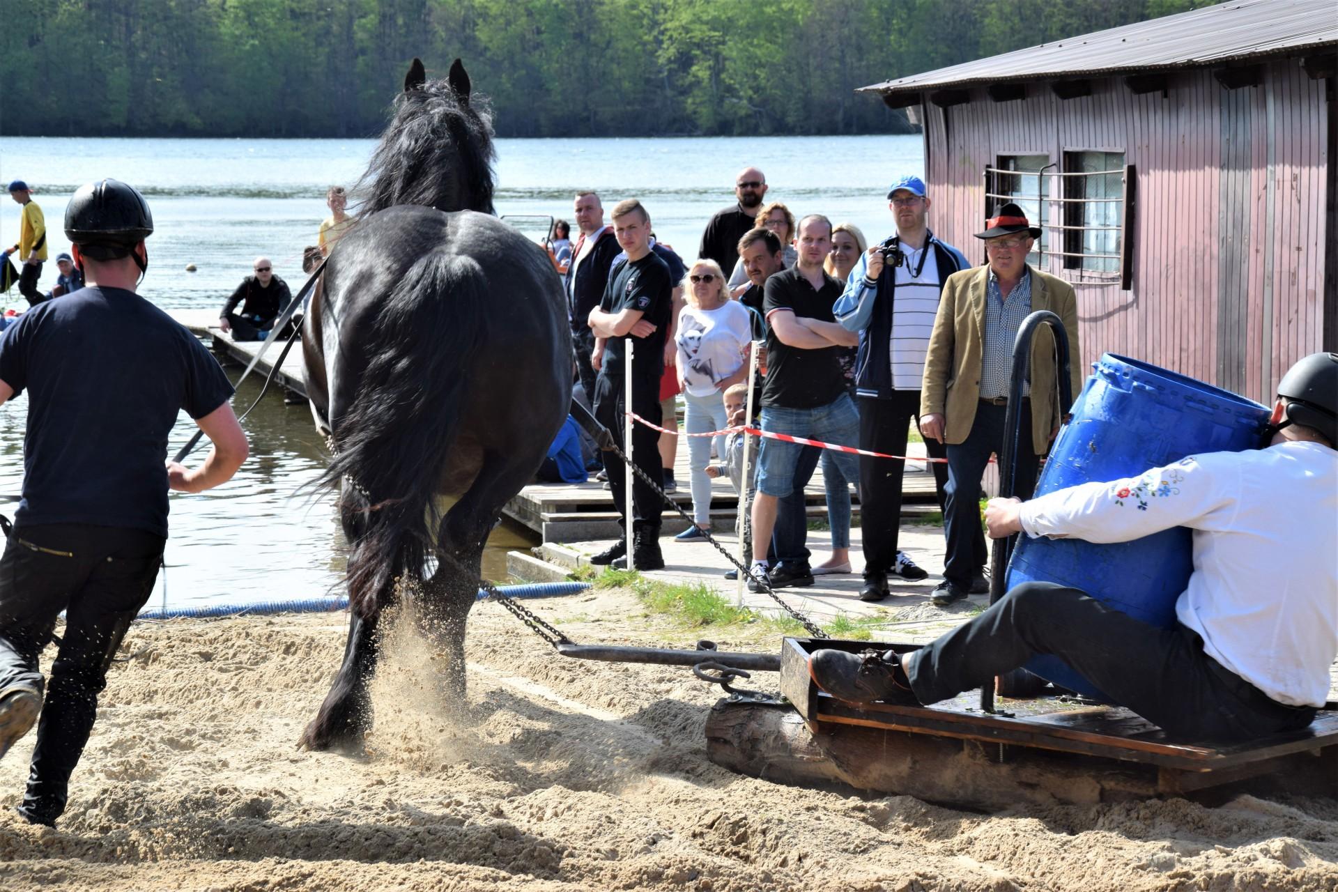Konie, Kaszuby, Wiśta wio! Zawody w Ostrzycach [FOTOREPORTAŻ] 19