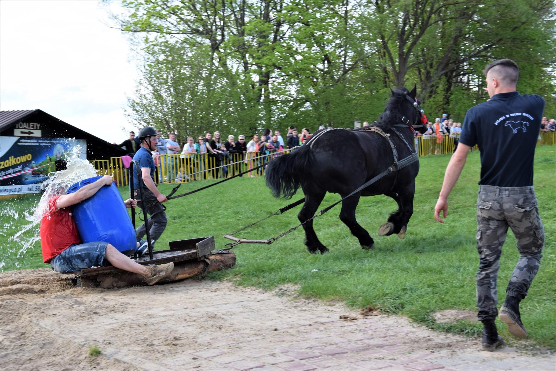 Konie, Kaszuby, Wiśta wio! Zawody w Ostrzycach [FOTOREPORTAŻ] 20