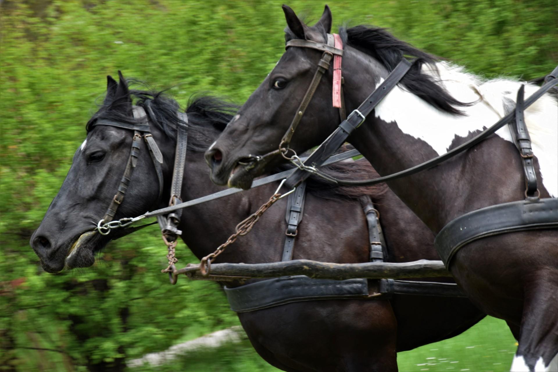 Konie, Kaszuby, Wiśta wio! Zawody w Ostrzycach [FOTOREPORTAŻ] 2