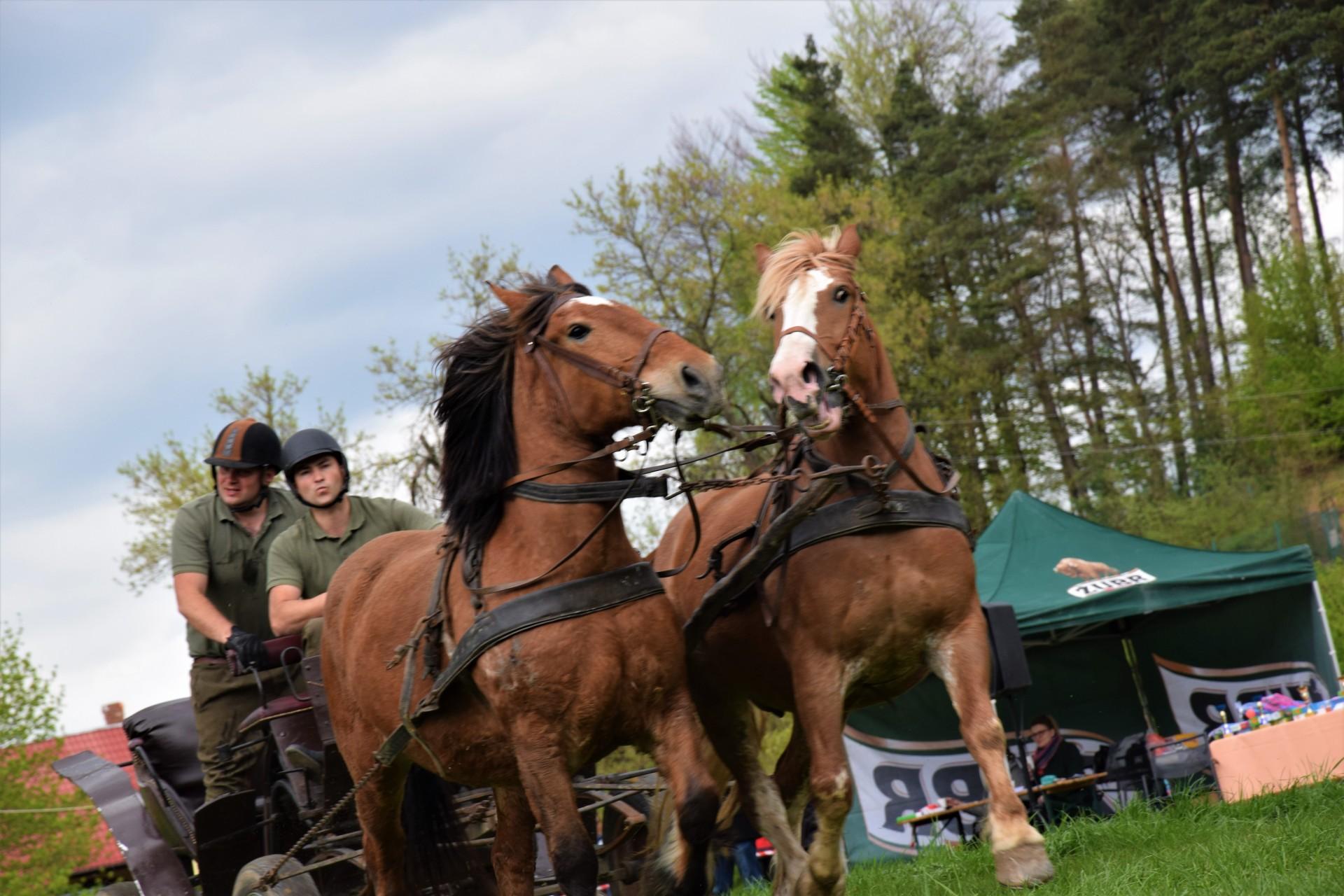 Konie, Kaszuby, Wiśta wio! Zawody w Ostrzycach [FOTOREPORTAŻ] 3