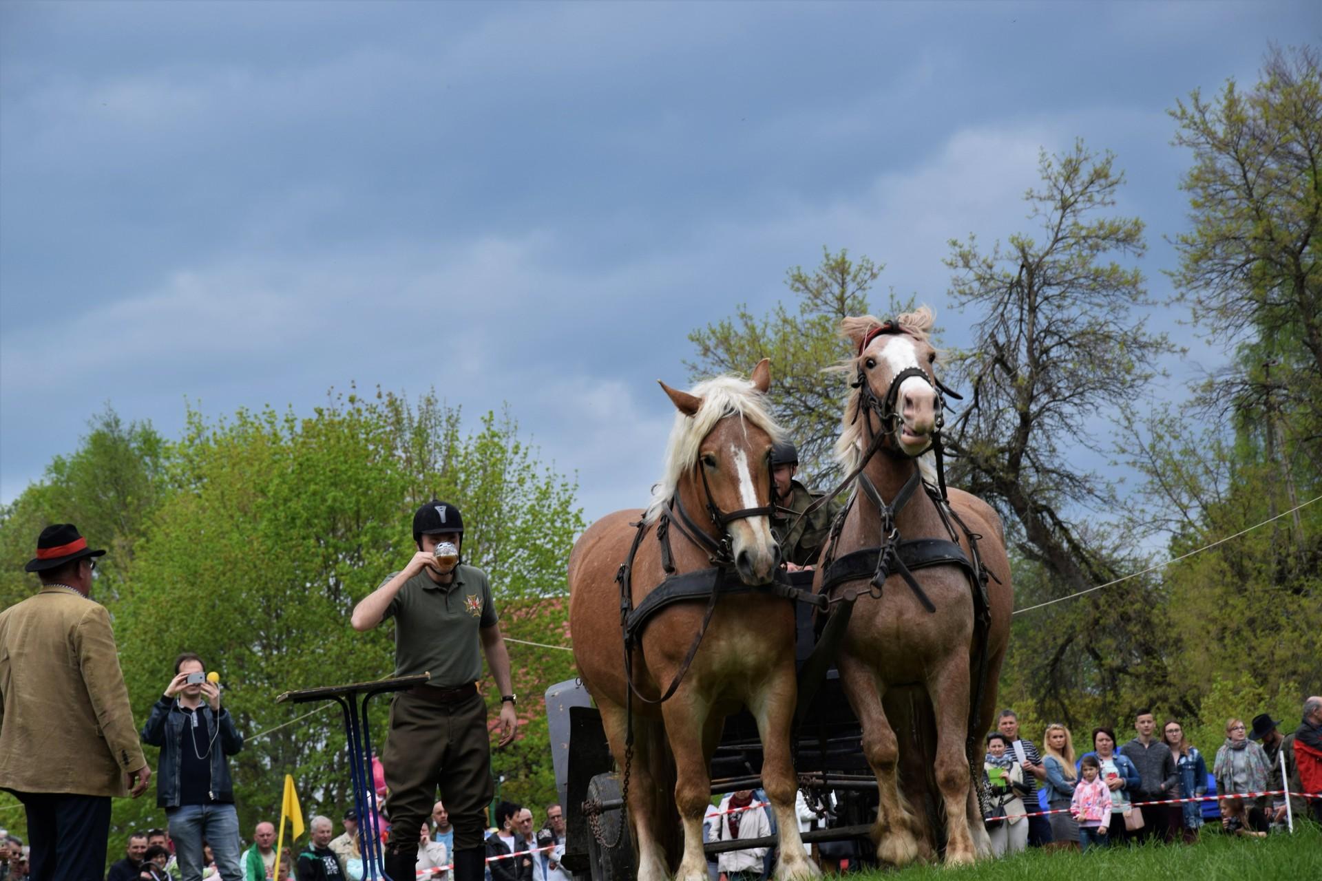 Konie, Kaszuby, Wiśta wio! Zawody w Ostrzycach [FOTOREPORTAŻ] 6