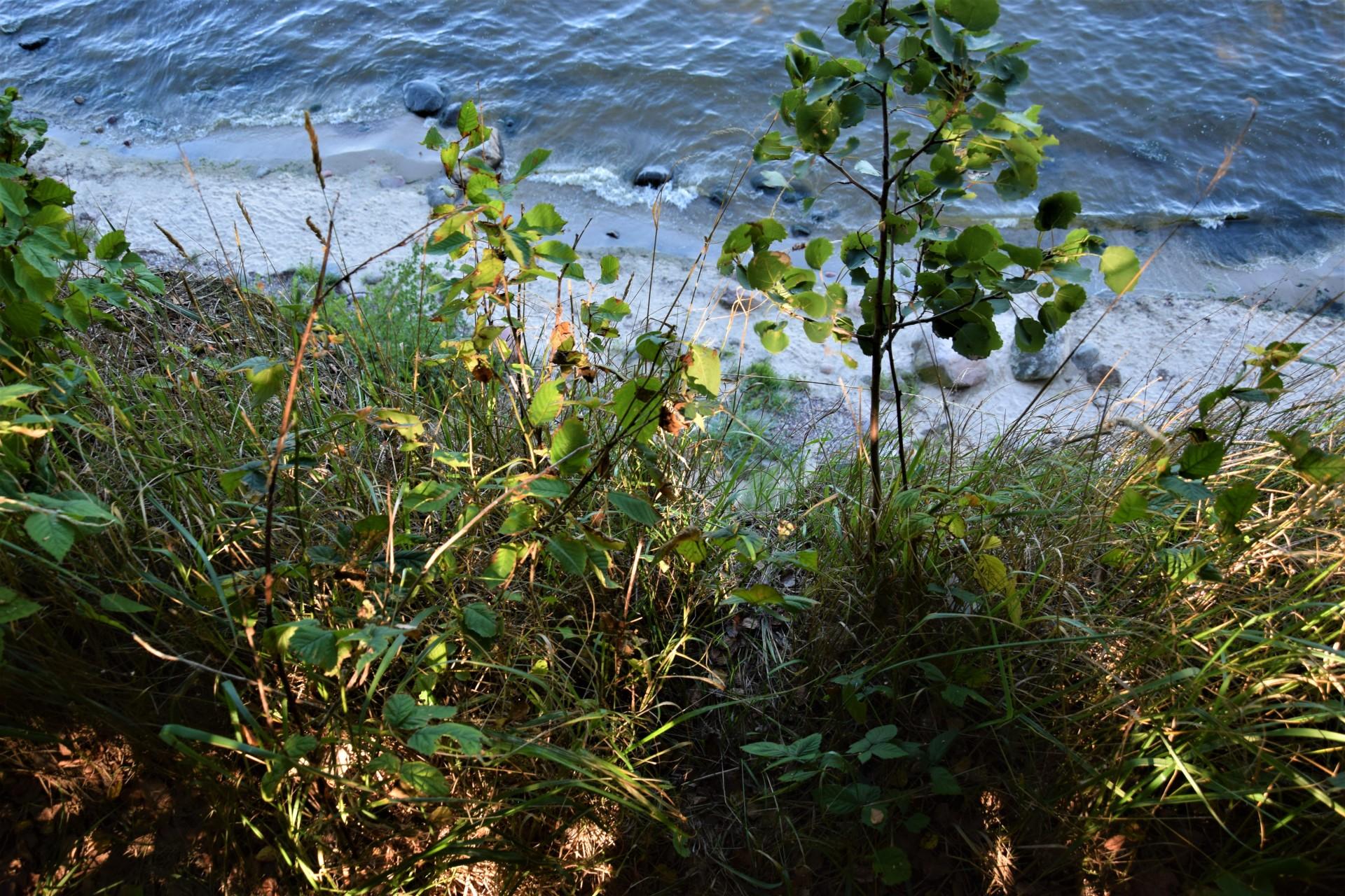 Cicha kameralna plaża w Osłoninie i Rzucewie. Plażing chodzony 15