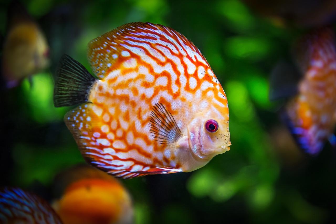 Nurkowanie i fotografia podwodna