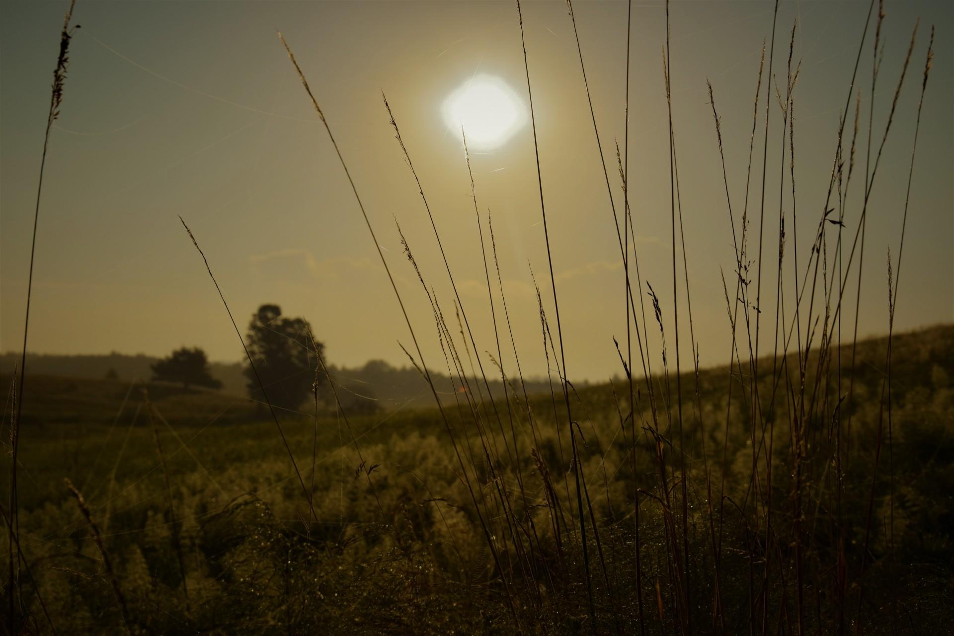 Łąka o świcie jest naga. Wracając z imprezy... 8