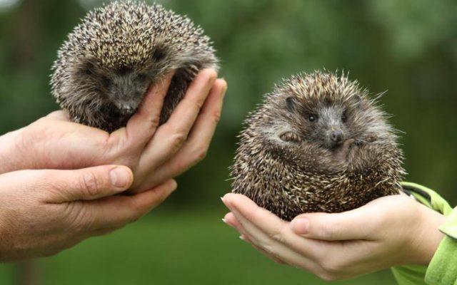 """Królami świata mienią się być ludzie. O czym mówią zwierzęta w """"Ostoi"""" 5"""