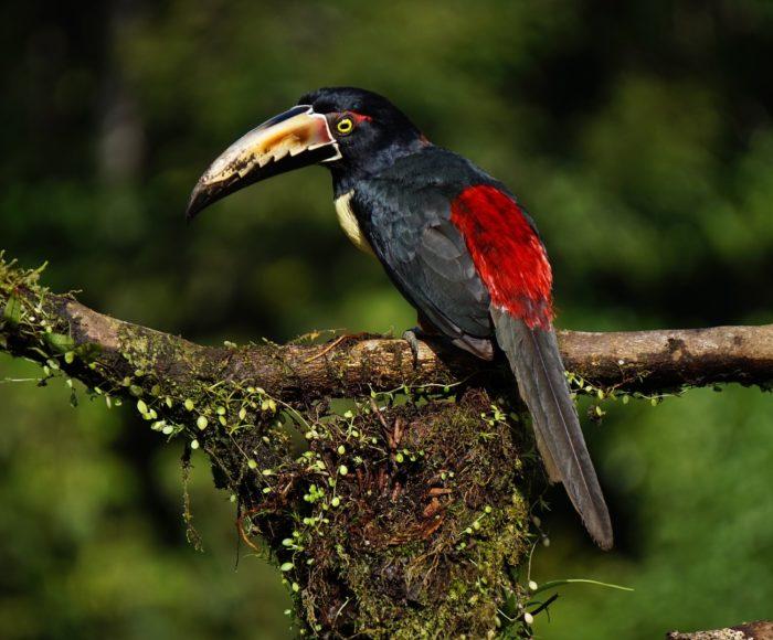 Wakacje na Kostaryce - praktyczne informacje dla zainteresowany 1