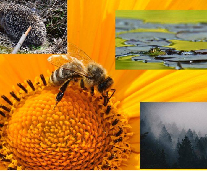 Globalne ocieplenie wokół nas. 10 przyrodniczych zwiastunów zbliżającej się katastrofy 5