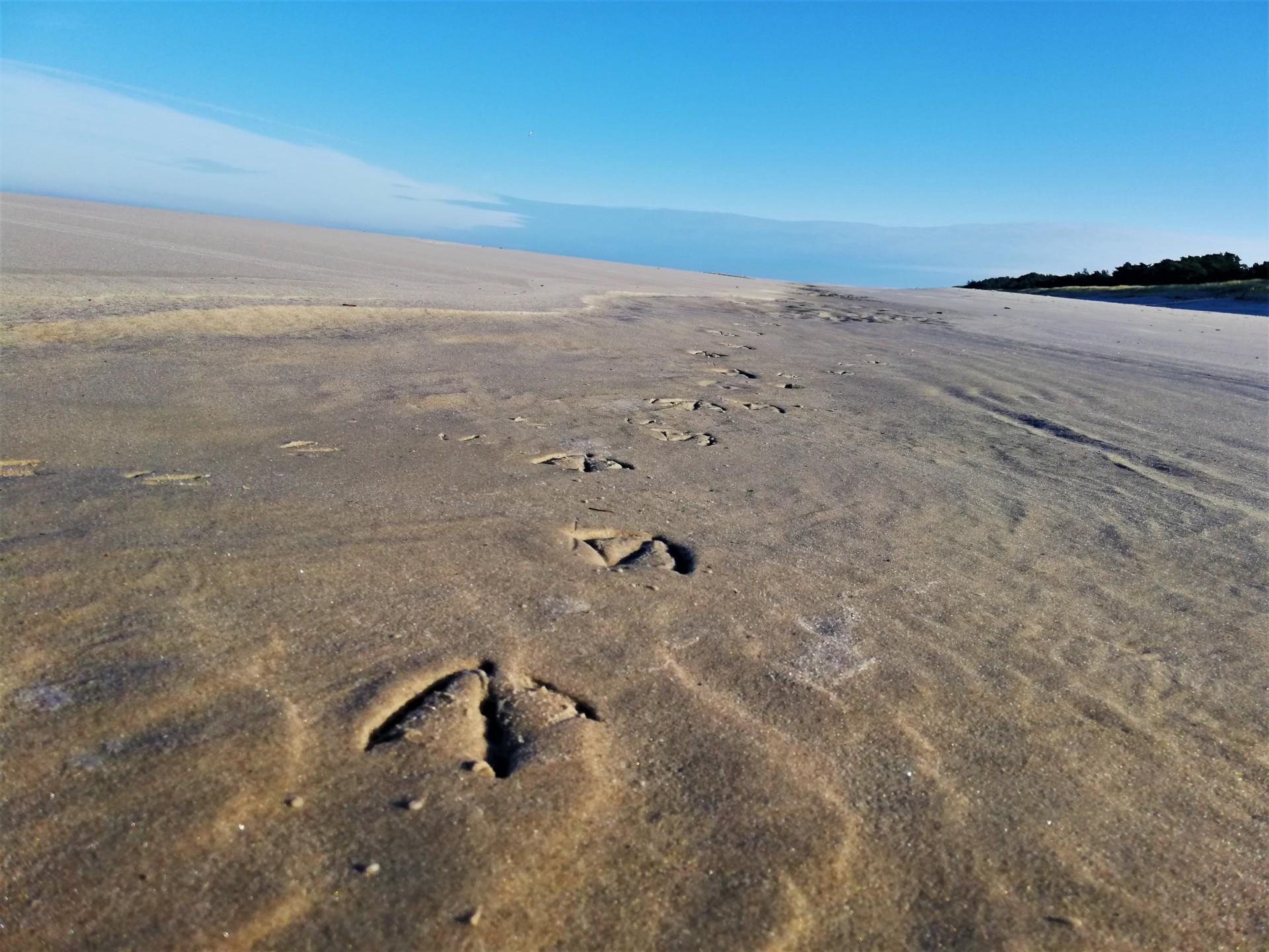 Plaża we władaniu przyrody. Lubiatowo - Kopalino, listopad 2019 1
