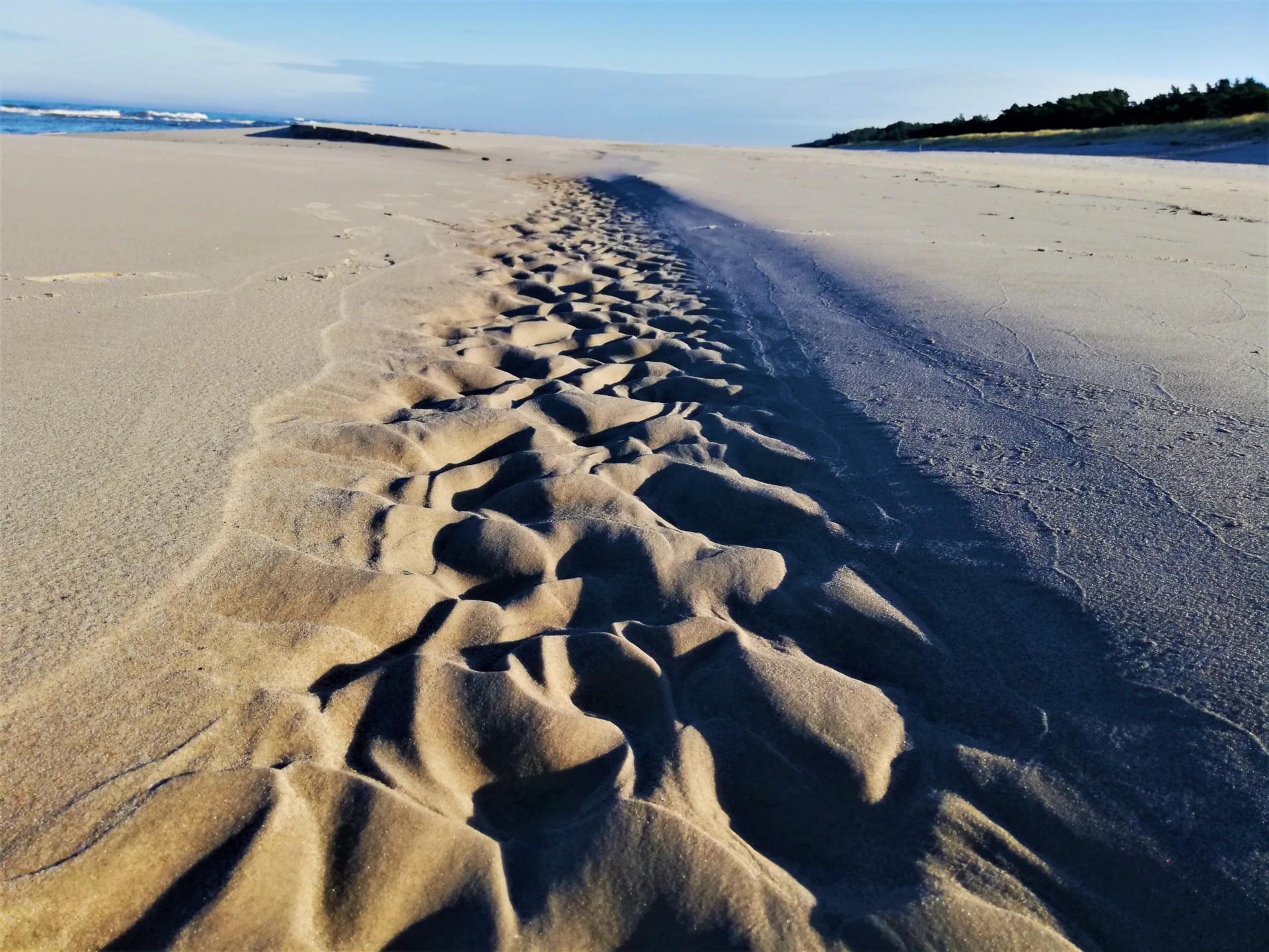 Plaża we władaniu przyrody. Lubiatowo - Kopalino, listopad 2019