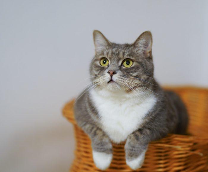 Drzewko dla kota - plac zabaw, drapak i legowisko w jednym