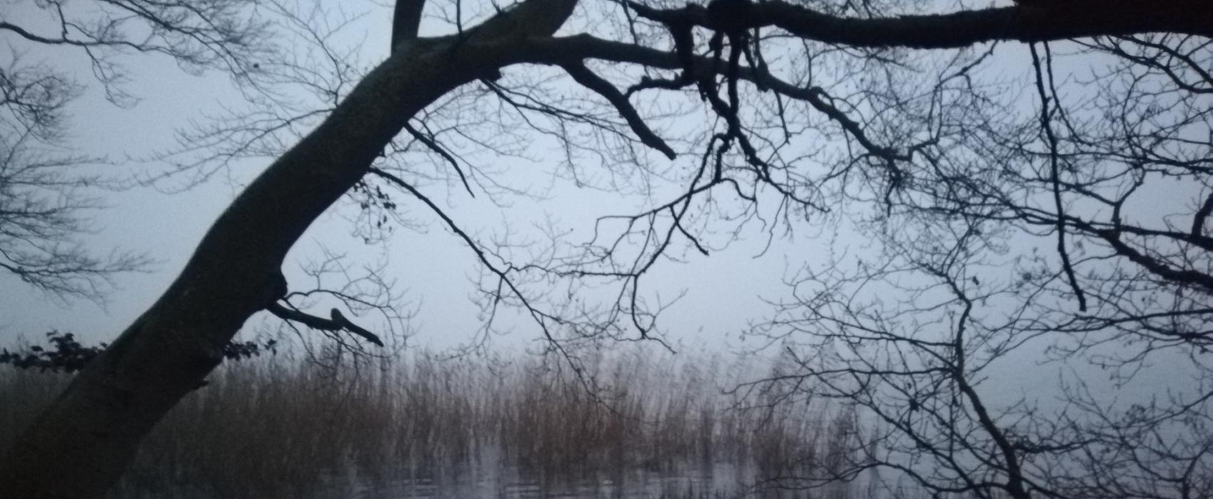 Mgła [FELIETON]